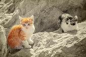 kittens on stones