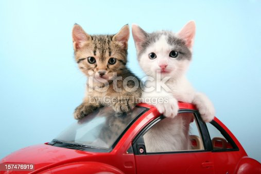 Two cute kittens traveling by car.