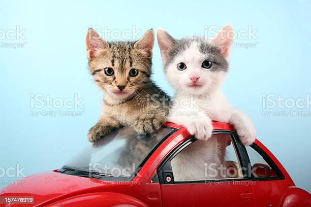 Kittens on summer vacations picture id157476919?b=1&k=6&m=157476919&s=612x612&h=9pul rvr1648phv5a1ewicwp6zy jqs0fzbhkxotrvs=
