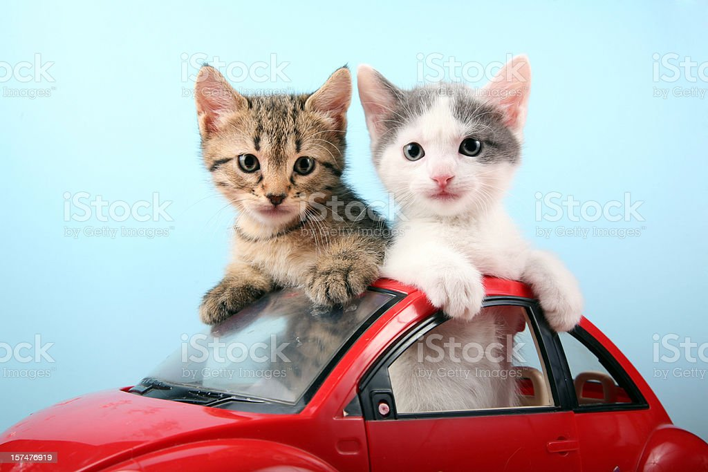 Kittens on summer vacations stock photo
