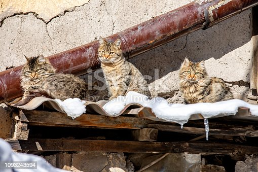 Kittens on the snow near the hot stove pipe for getting warmer
