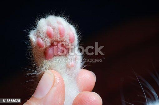 istock kitten's paw 613868526