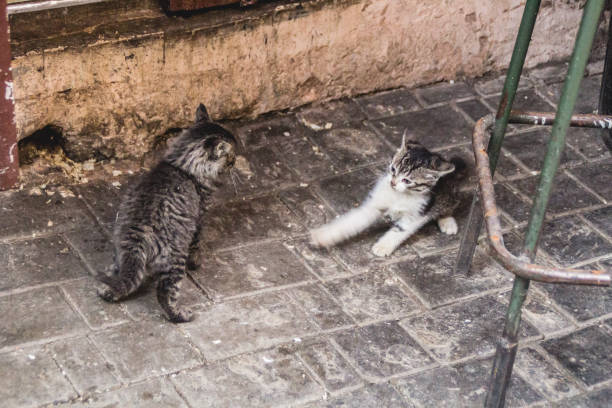 Kätzchen – Foto