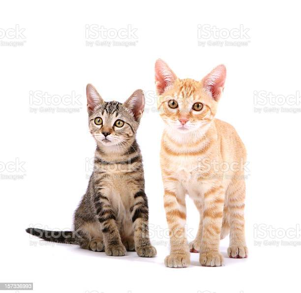 Kittens picture id157336993?b=1&k=6&m=157336993&s=612x612&h=nomvyczgy0azq3yappusivvve3vy9lwfwqi4d93c9xg=