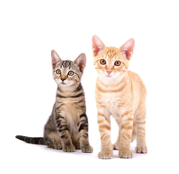 Kittens picture id157336993?b=1&k=6&m=157336993&s=612x612&w=0&h=xxqaoamkbwloqr5oaasxfsuuk2lzvmzpkcujavd9w s=