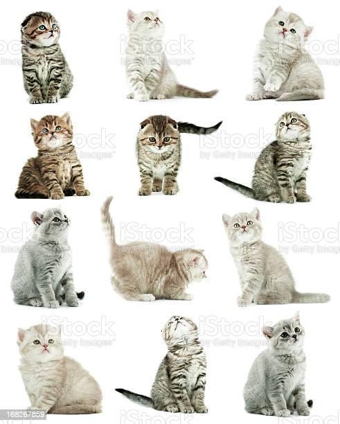 Kittens picture id168267859?b=1&k=6&m=168267859&s=612x612&h=0bozj5bnz4n4r nbxo25rbqpi4rjgf1c7xicynuvk6o=