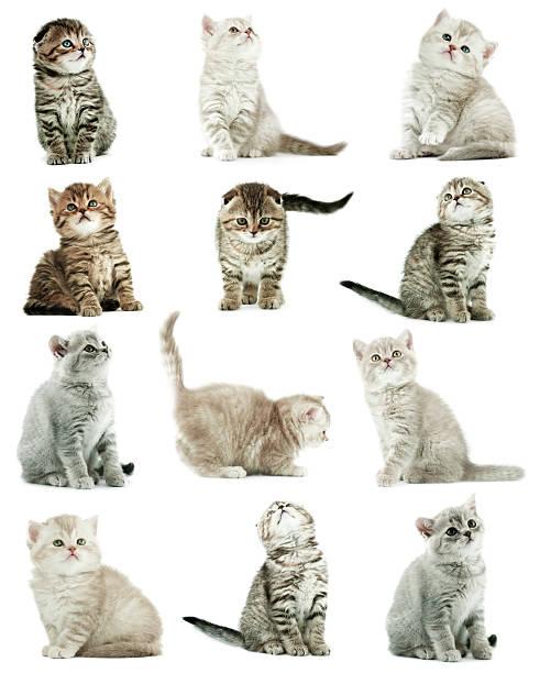 Kittens picture id168267859?b=1&k=6&m=168267859&s=612x612&w=0&h=tcxphqoqggbb23tpsqvbourf7ubuyiud6fvhq3pwtjg=