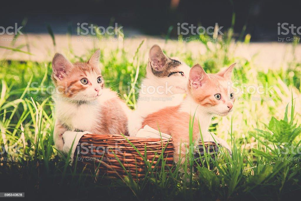 Kätzchen  Lizenzfreies stock-foto