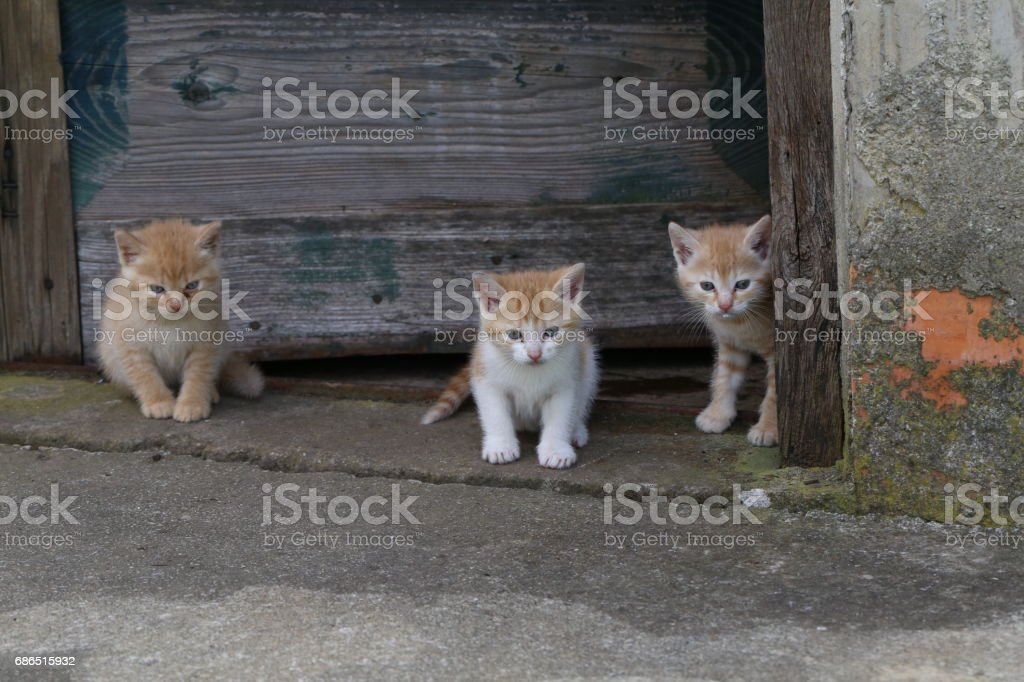 Kittens royalty free stockfoto