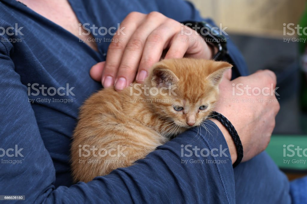 Kittens foto stock royalty-free