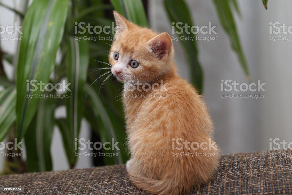 Kittens foto stock royalty-free
