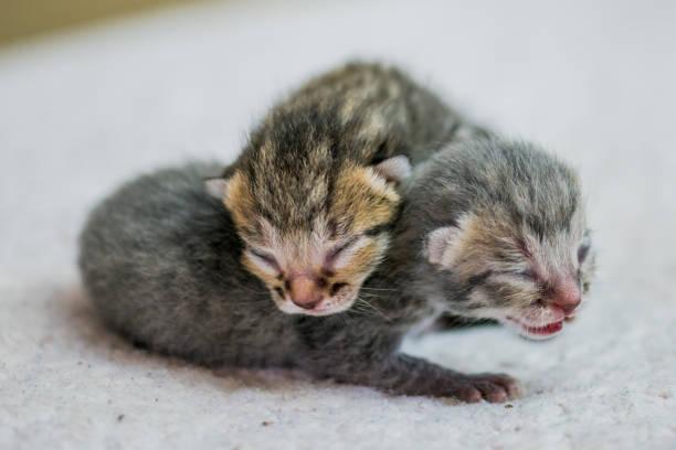 Kittens picture id819825888?b=1&k=6&m=819825888&s=612x612&w=0&h=vgt3hqqxmtyslnmvjg4acf7ghna9cevabpkf52fh0q0=