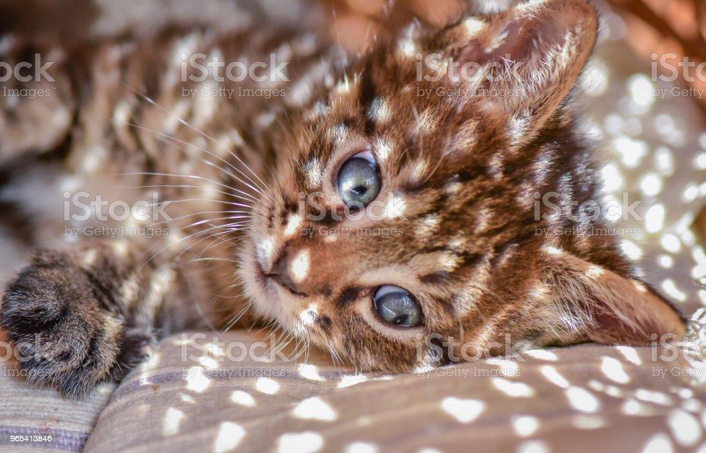 Kittens - 로열티 프리 가축 스톡 사진