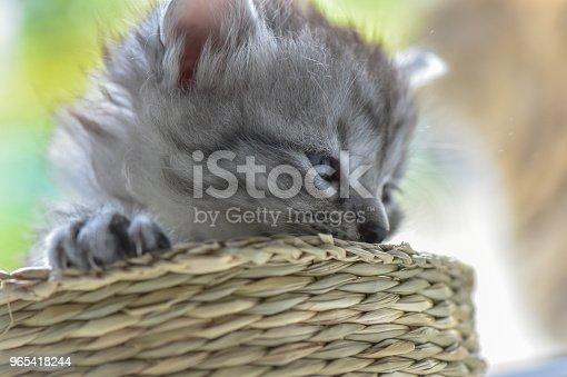 Kittens - Stockowe zdjęcia i więcej obrazów Cień