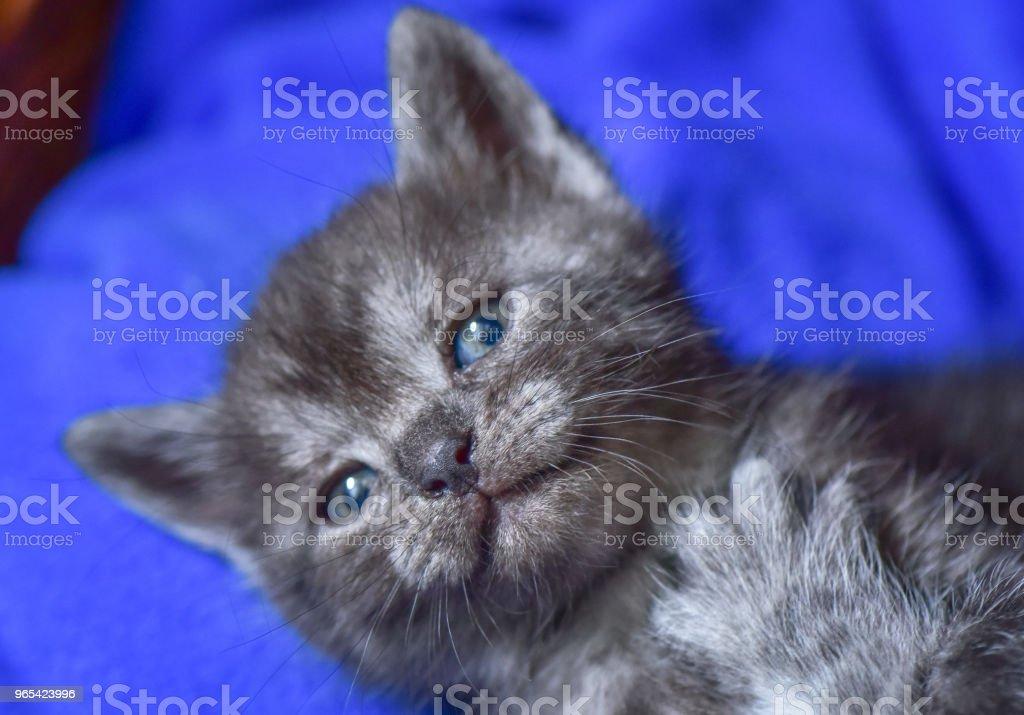 Kittens zbiór zdjęć royalty-free