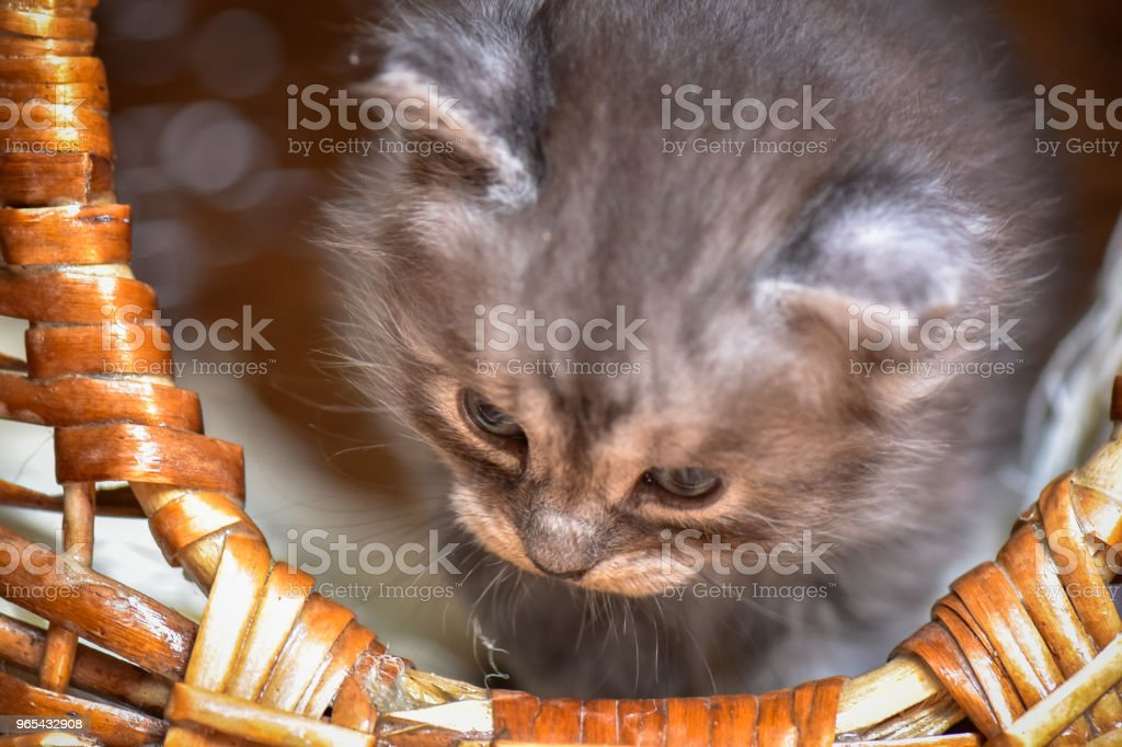 Kätzchen - Lizenzfrei Auge Stock-Foto