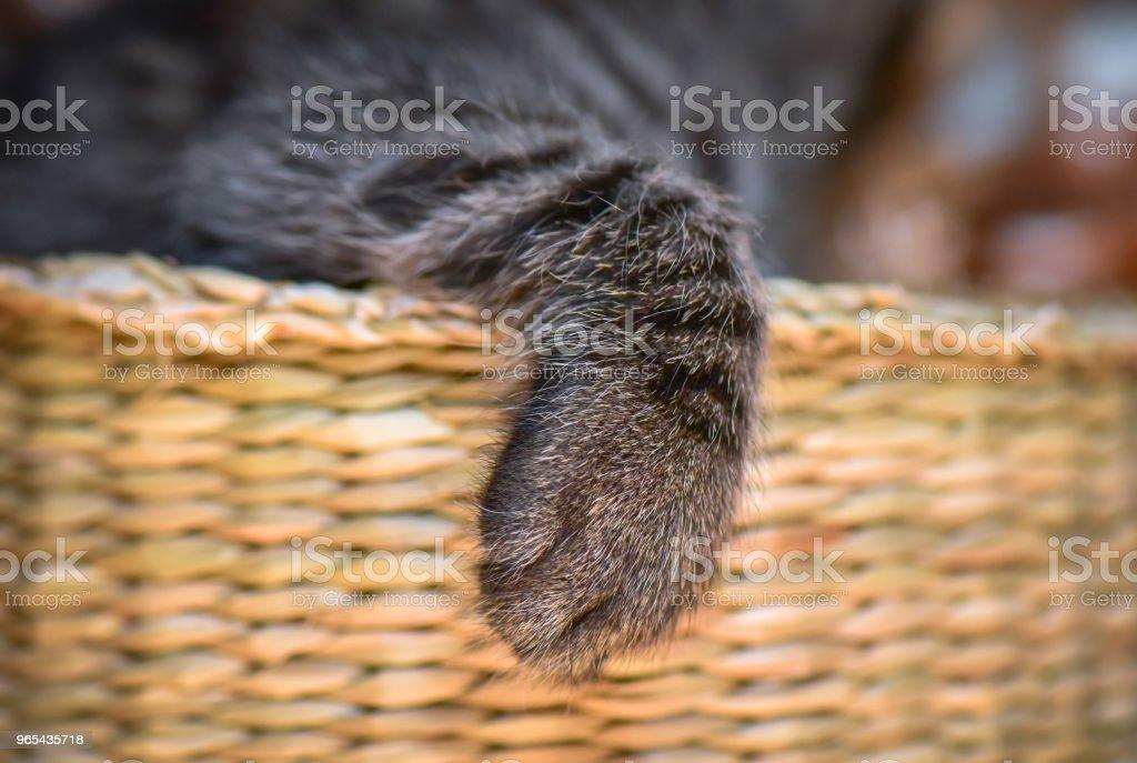 Chatons - Photo de Animaux de compagnie libre de droits