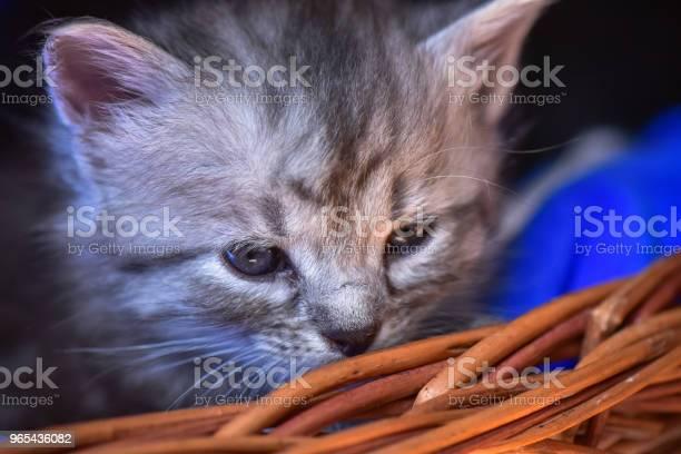 Foto de Que Os Gatinhos e mais fotos de stock de Animal