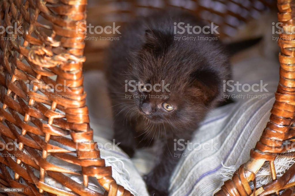 Que os gatinhos - Foto de stock de Animal royalty-free