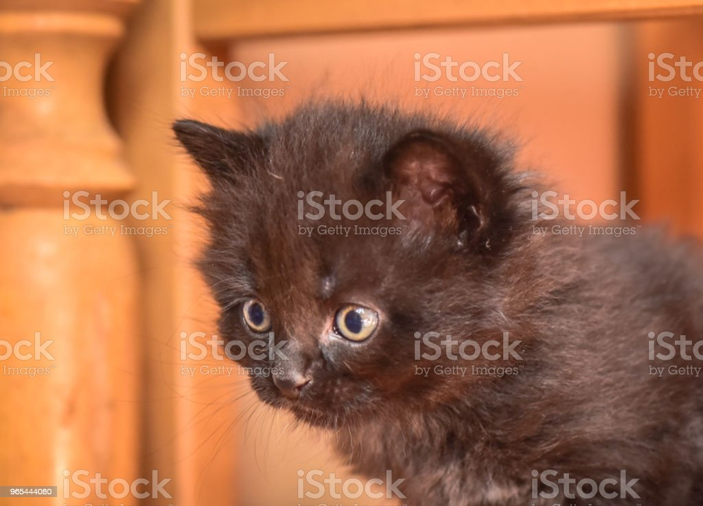 Kittens royalty-free stock photo