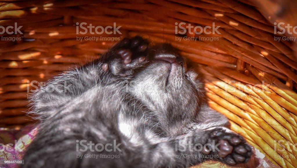 Kittens - zdjęcia stockowe i więcej obrazów Cień