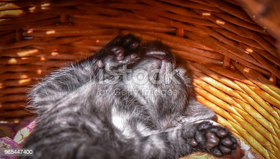 Kittens Stock Photo & More Pictures of Animal