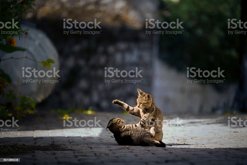 Kittens playing on the flor. stock photo