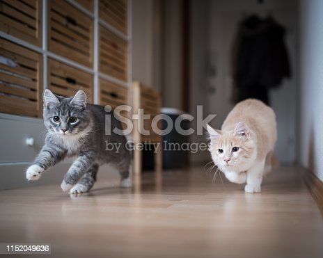 istock kittens playing 1152049636