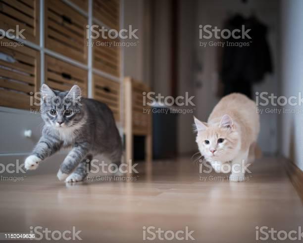 Kittens playing picture id1152049636?b=1&k=6&m=1152049636&s=612x612&h=dsgx4m80kzvwt1cay74xr5fghhq4h8a492qr0plowfo=