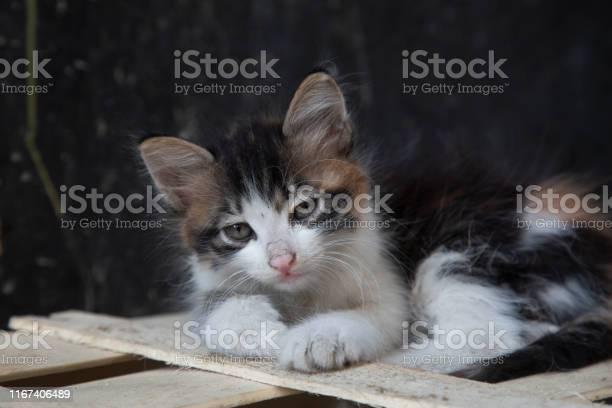 Kittens relaxing picture id1167406489?b=1&k=6&m=1167406489&s=612x612&h=okdyzlfo fqhs1ujwj7vs quxrqfygdj4gvif ucvos=