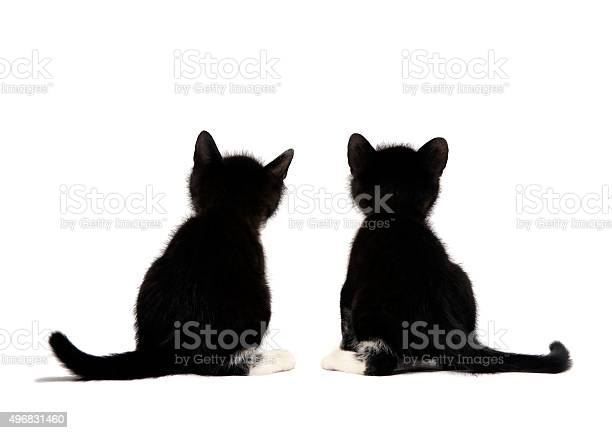 Kittens sits on a white background picture id496831460?b=1&k=6&m=496831460&s=612x612&h=lrnphuujwixmuus3kf0jleuv x5ucs7c7cvb4m76oga=