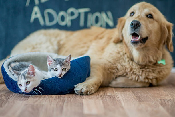 Kittens Sitting by a Golden Retriever - Photo
