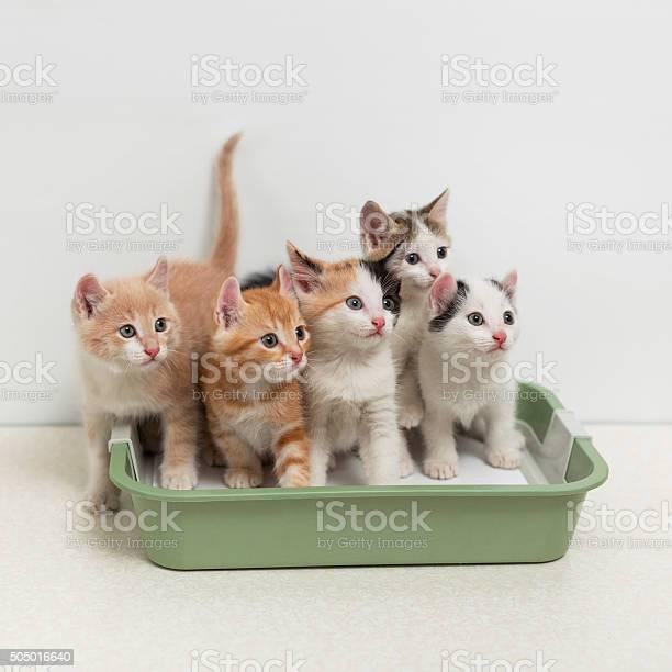 Kittens sitting in cat toilet picture id505016640?b=1&k=6&m=505016640&s=612x612&h=wrt8vwknfc hyul0jabkq9v4zjgmbjxbeigeaayotsc=