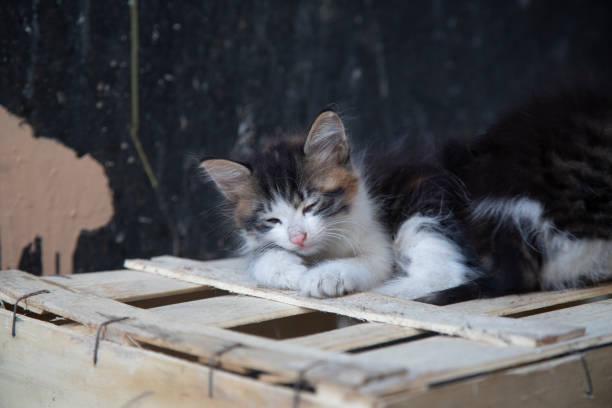 kitten es sleeping - grau getigerte katzen stock-fotos und bilder