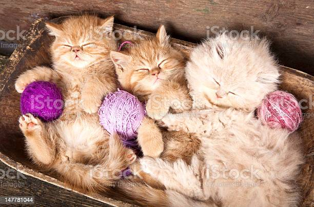 Kittens sleeping picture id147781044?b=1&k=6&m=147781044&s=612x612&h=futtcxn4sa0u92hdcswlnbou04klum44fy gdz86rji=