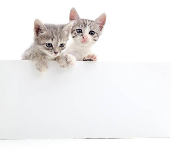 Kittens with blank picture id669247426?b=1&k=6&m=669247426&s=612x612&w=0&h=uuau1douzvqlxuzjcaw7tgkukxy2w4b3049dbshrwju=
