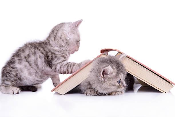 kittens con libro - foto de stock