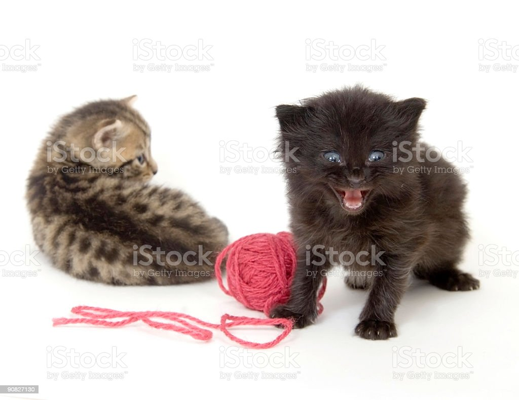 Kittens with red ball of yarn on white background royalty-free stock photo