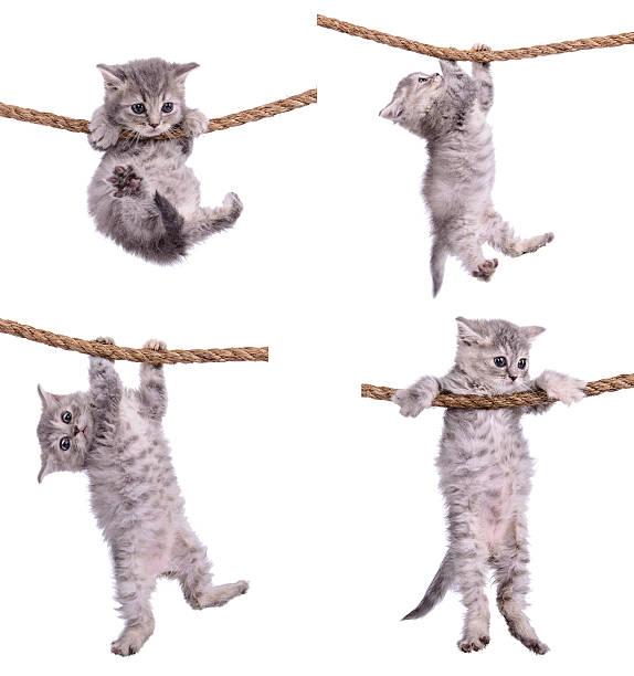 kittens con cordón - foto de stock