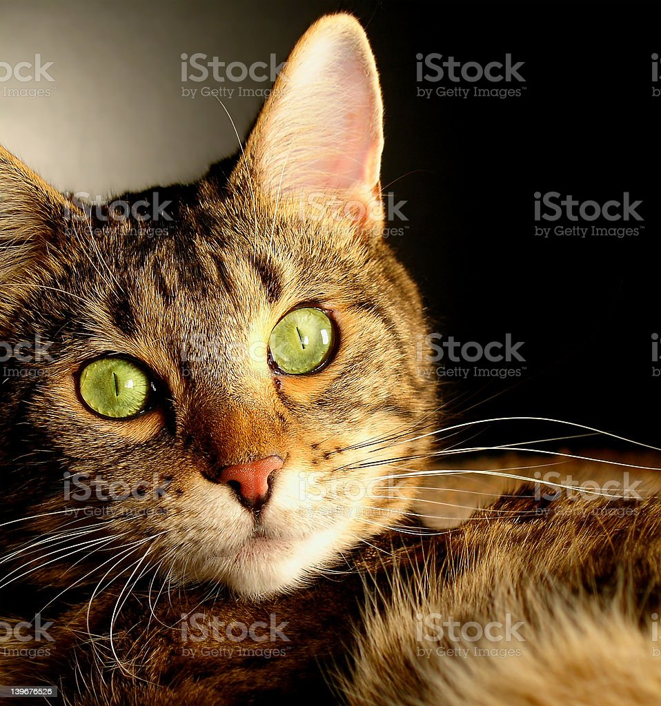 Kitters the Cat royalty-free stock photo