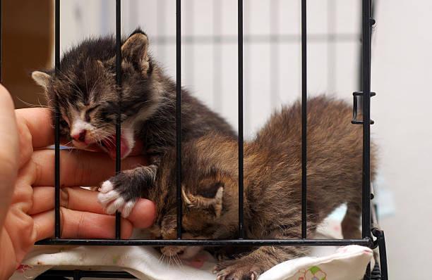 Kitties Want Freedom stock photo