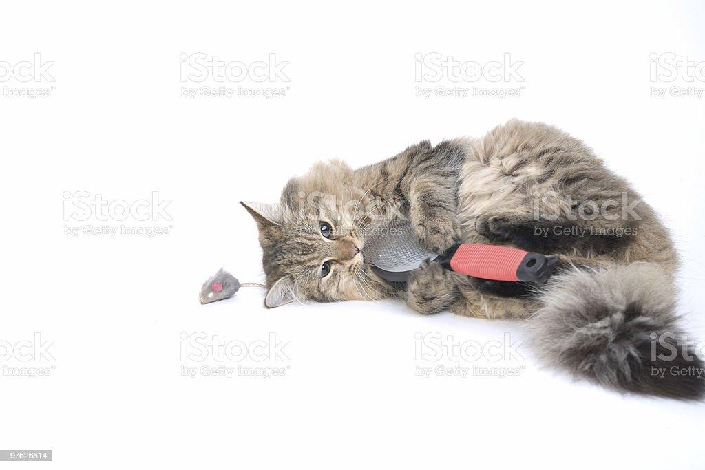 Kitting playing with brush royalty-free stock photo