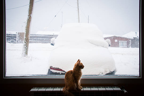 kitty solo mirando fuera de la ventana, con la nieve - foto de stock