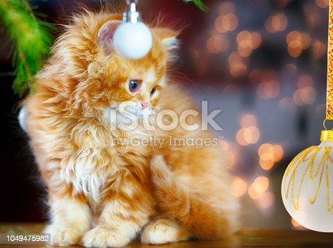 Christmas and Red Cat