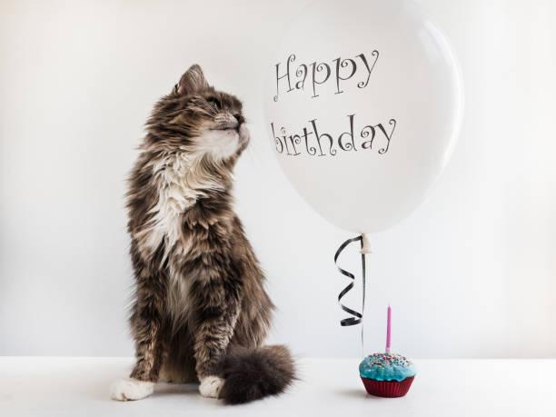 kitty und helium-ballon mit geburtstagsgrüße - geburtstag vergessen stock-fotos und bilder