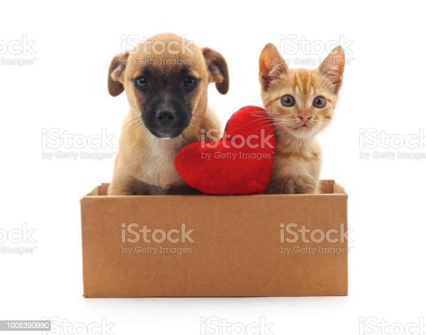 Kitty and puppy in the box picture id1005390990?b=1&k=6&m=1005390990&s=612x612&h=64api48ja hvx4kwwb9dcech kosszn68y6yk5lhfio=