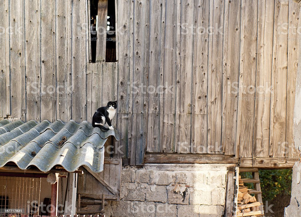 Kitty at the Barn stock photo
