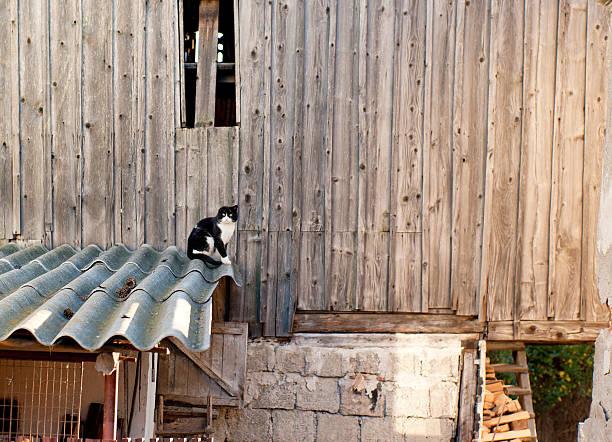Kitty at the Barn stock photo