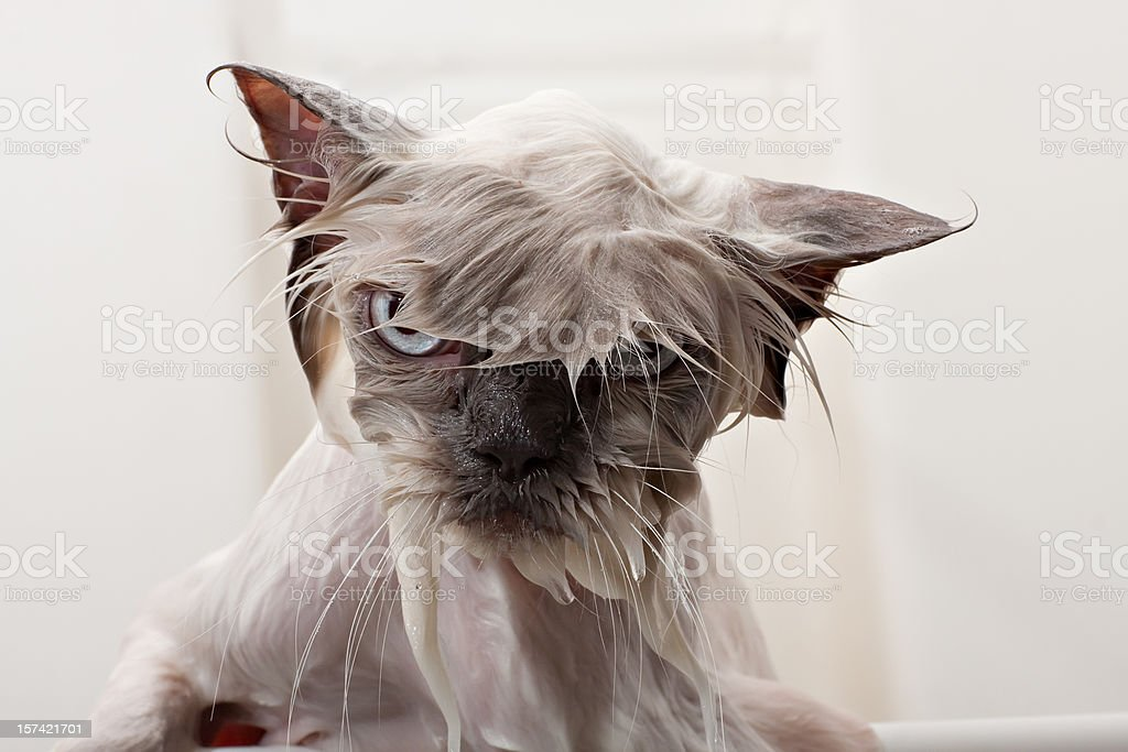 Kitty Bath Time stock photo