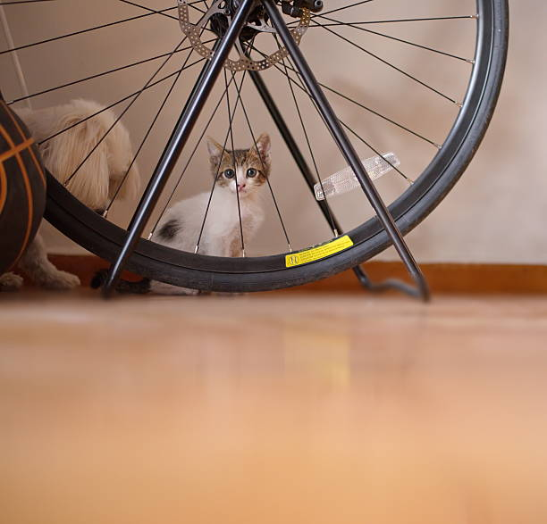 Kitty behind a bike wheel stock photo